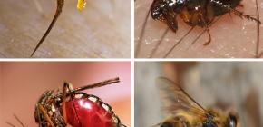 Reguli de prim ajutor pentru mușcăturile de insecte: ce trebuie făcut mai întâi