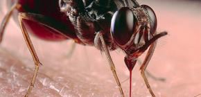 Despre mușcăturile de insecte și tratamentul lor