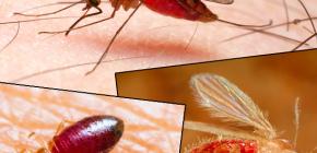 Bite de diferite tipuri de insecte și fotografiile lor