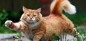 Cum să elimini rapid și în siguranță puricele de la o pisică