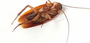 Scapa de invazii de gândaci la domiciliu