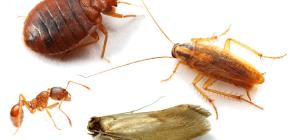 Cum să lupte împotriva insectelor acasă în apartament