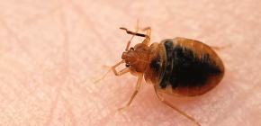 Bug bug-uri și mijloace de auto-control