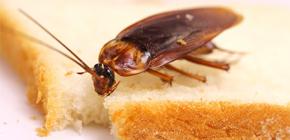 Cum pot scăpa de gândacii în apartament