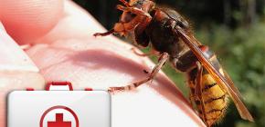 Ce trebuie să faceți atunci când un hornet mușcă și cum poate fi periculos pentru sănătate