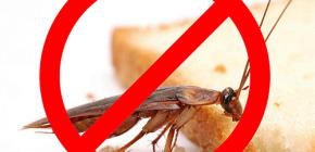 Distrugerea insectelor: sfaturi utile și nuanțe importante